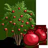 Pomegranate Tree-icon