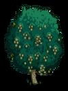 White Walnut2-icon