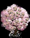 Pink Dogwood Tree2-icon
