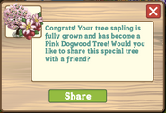 Pink Dogwood Tree Growth Message