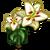 Casa Blanca Lily-icon
