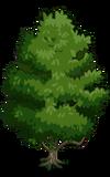 Singapore Jackfruit Tree1-icon