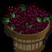 Elderberry Bushel-icon