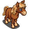 Dartmoor Pony Foal-icon