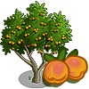 Apricot Tree-icon.png