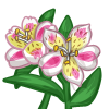 Alstroemeria Lilly-icon
