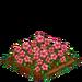 Pink Hibiscus 100