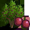 Passion Fruit Tree-icon