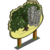 Crack Willow Tree