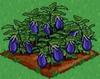 Eggplant 100.png