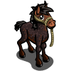 Galiceno Foal-icon