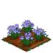 Spring Squill 100