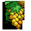 Semillon Grape-icon