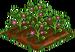 Appleberry 66