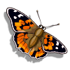 Painted Lady-icon