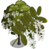 Black Locust Tree-icon.png
