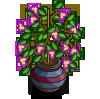 Bougainvillea Pot-icon