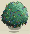 Fig Tree5-icon