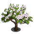 Evergreen Pear Tree-icon