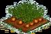 Carrot 100
