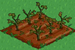 Soybean withered