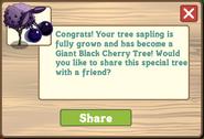 Giant Black Cherry Tree Message
