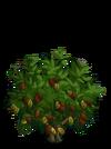 Giant Cocoa Tree2-icon