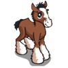 Clydesdale Foal-icon
