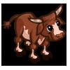 Ankole Watusie Cattle Calf-icon