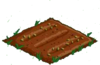 Green Hellebores 00