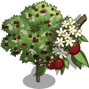 Bird Cherry Tree-icon.png