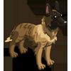 Dutch Shepherd-icon