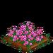 Alpine Rose 100