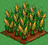 Corn 100.png