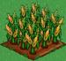 Corn 100