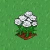 Perfect White Rose-icon