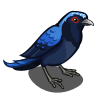 Asian Fairy Bluebird-icon.png