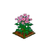 Perfect Pink Aster-icon