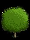 Grapefruit1-icon