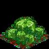 Square Melon extra100