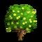 Pomelo Tree-icon