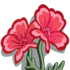 Pink Poppies-icon