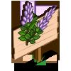Licorice Plant Mastery Sign-icon