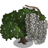 Crack Willow Tree-icon