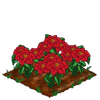 Poinsettia extra100.png