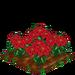 Poinsettia extra100