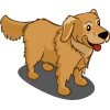 Golden Retriever-icon