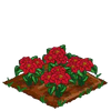 Poinsettia 100.png
