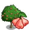 Wax Apple Tree-icon