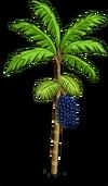 Acai Tree2-icon